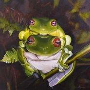 Red- eyed tree frogs 2