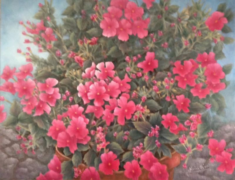 """""""Hot Rose"""" Verbena"""