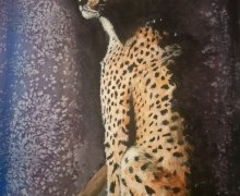 Leopard in the Shadows