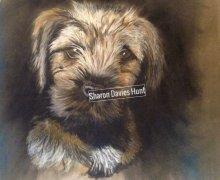 Hamish, border terrier