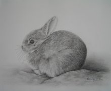 2018 Rabbit-Graphite on white Arches white 300gsm W/C paper. Unfortunately the paper shows up grey! JPG