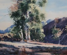 Beautiful Flinders Gums