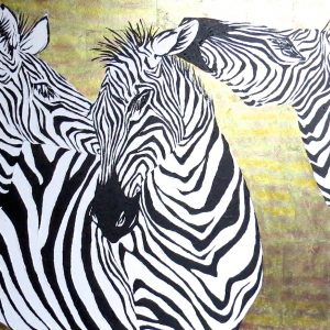 Zebra Archives  Colour in Your Life