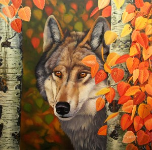 Colours of the wolf