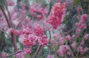 Pink, Blossoms, Spring Time
