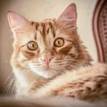 Profile picture of Funny Cats Videos