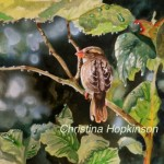 Profile photo of Christina Hopkinson Harmonyart